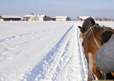 Kutsche fahren au dem Springerhof