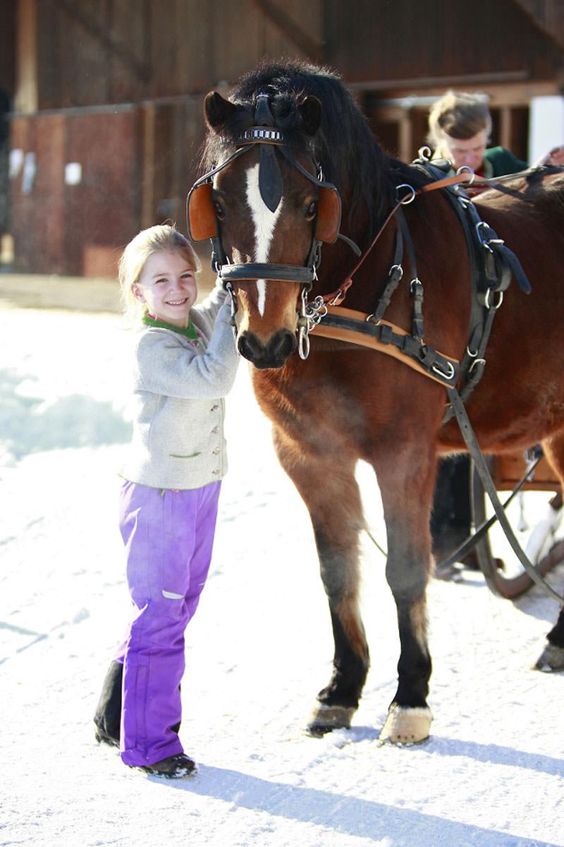 Ponyreiten und Kutsche fahren auf dem Springerhof