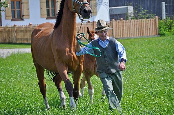 """Seit über 40 Jahren hat sich unser Opa Ambros Rinser, bekannt als """"Springer Brosl"""" der Pferdezucht verschrieben"""