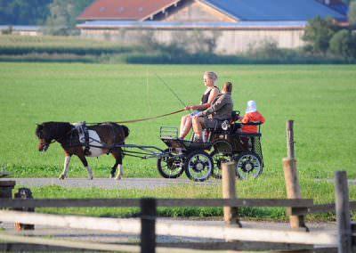 Kutsche fahren rund um den Springerhof