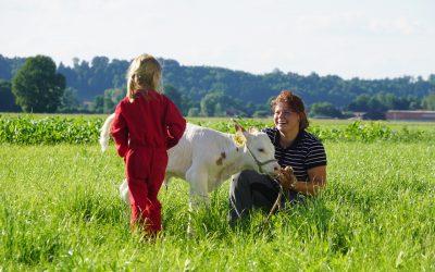 Der Springerhof wird biologisch bewirtschaftet (Naturland-Betrieb)