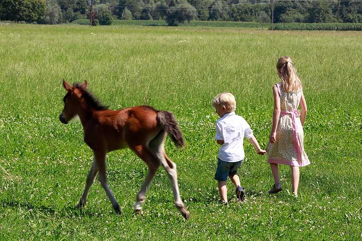 Kinder mit Fohlen auf dem Springerhof
